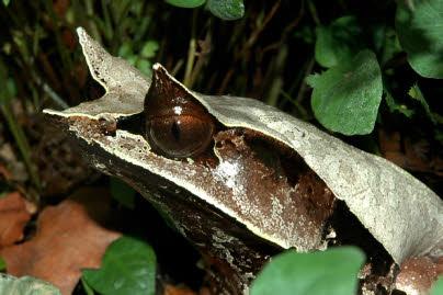 mehrere arten von schildkröten zusammen halten